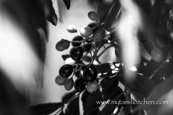 MTK_leaves-1