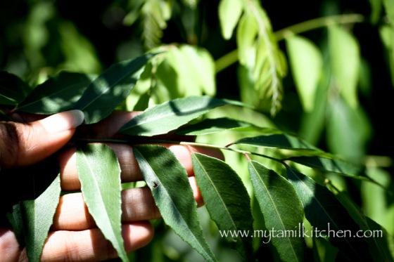 MTK_leaves-2